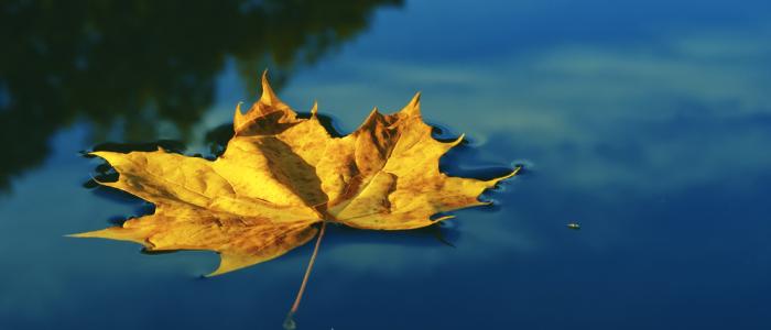 Afinal, o que é Mindfulness?